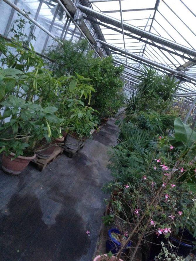 Planten hotel – Overwintering