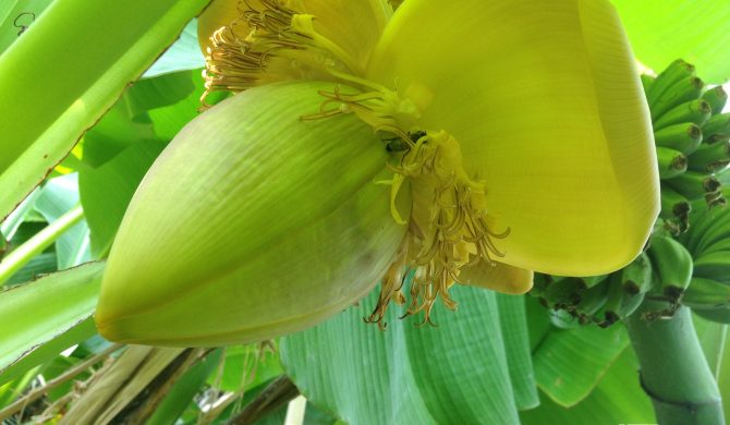 Update kortingslijst plantenmarkt