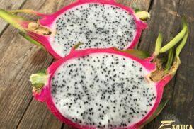 Pitahaya – Hylocereus Undatus (Drakenvrucht, Dragonfruit)