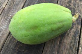 Carica Papaya (Papaya)