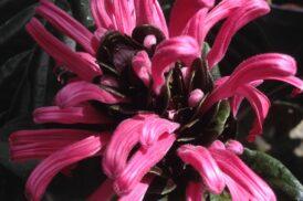 Exotische Vaste Planten