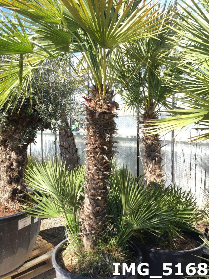 Fotogallerij beschikbare grote planten