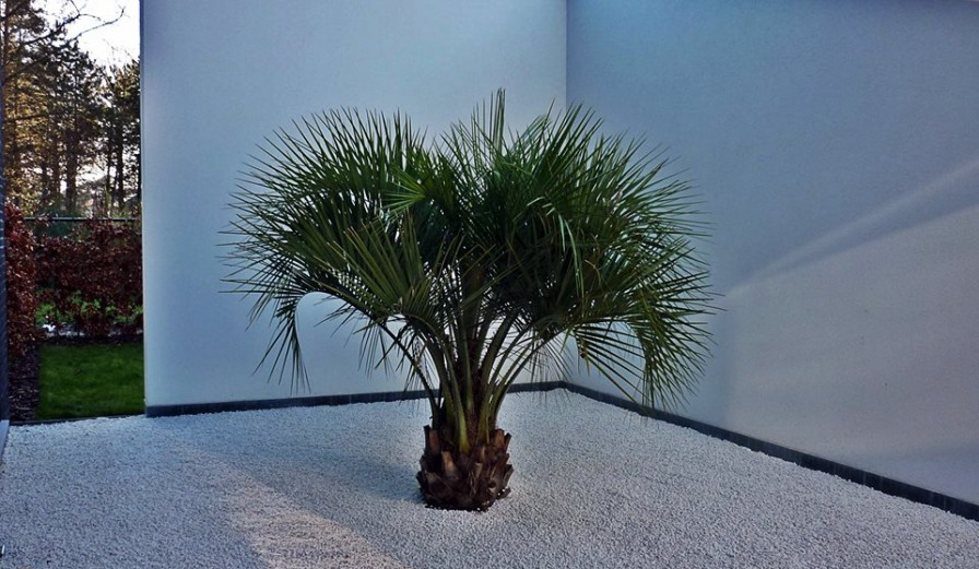 Kunstzinnig met Palmen